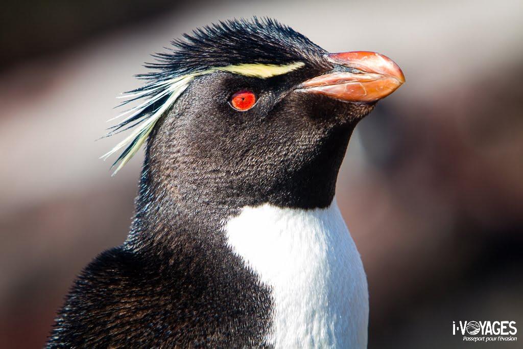 Isla pinguino