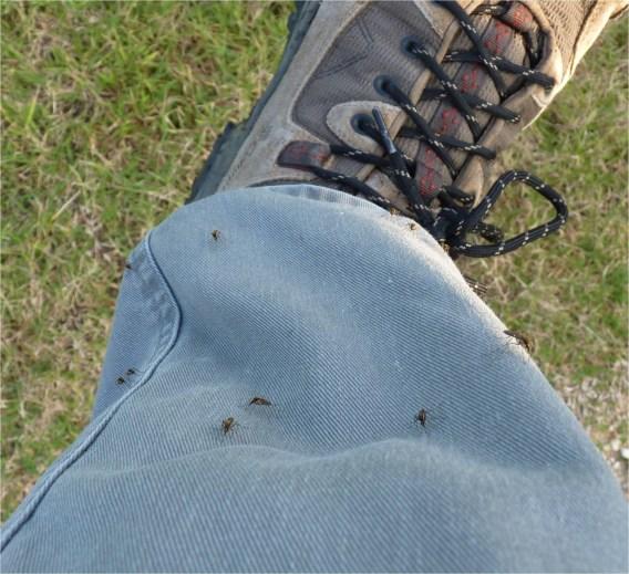 Rien de tel qu'un bon pantalon de rando pour se protéger des moustiques