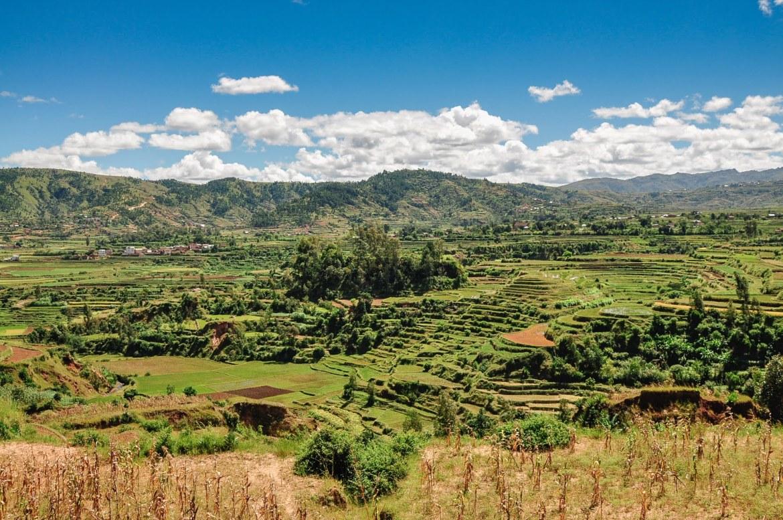 Dans les rizières de Bétafo à Madagascar