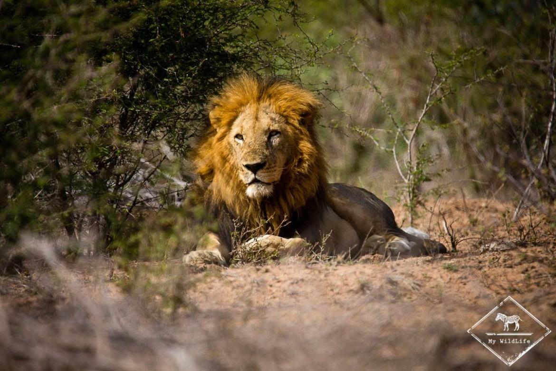 Les plus beaux paysages d'Afrique - parc national kruger en Afrique du sud
