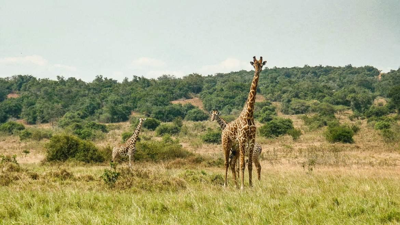 Parc national de l'Akagera au Rwanda - les plus beaux paysages nature d'Afrique