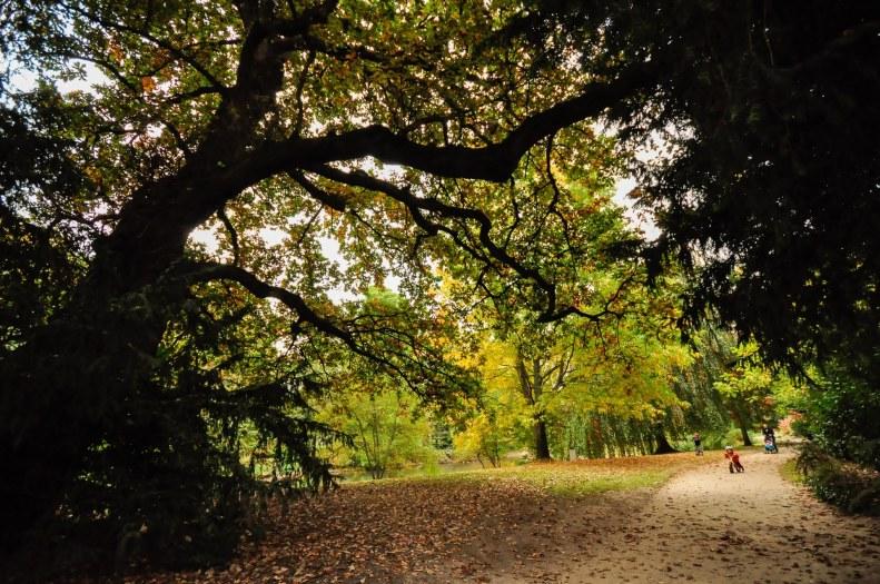 Les arbres remarquables du parc Oberthur