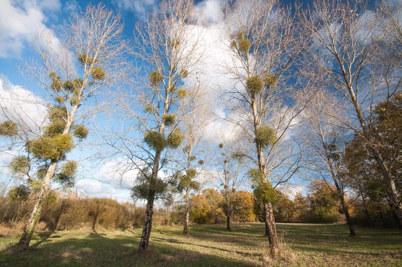 marais-goulaine-arbres