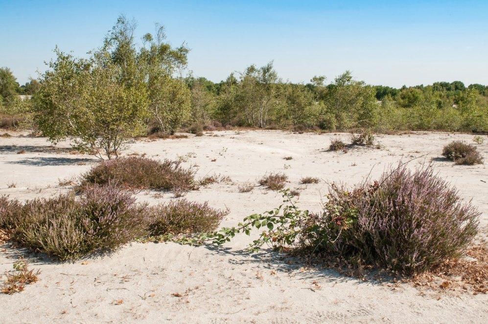 Végétation typique du terril