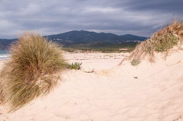 guincho plage dunes vegetation