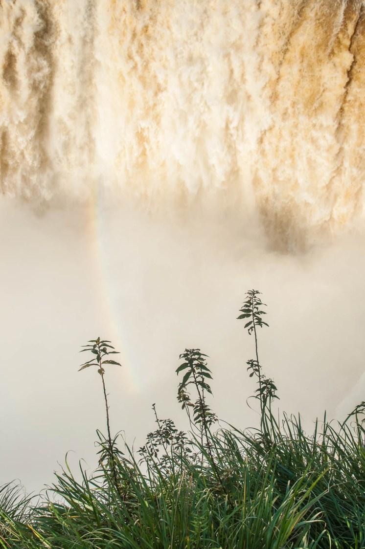 La végétation profite de l'humidité Parc national des chutes d'Iguazu