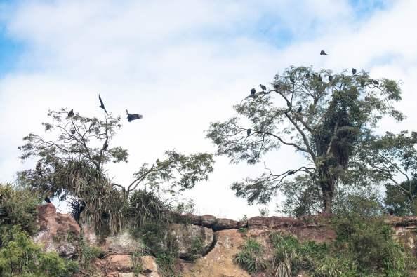 Le territoire des vautours