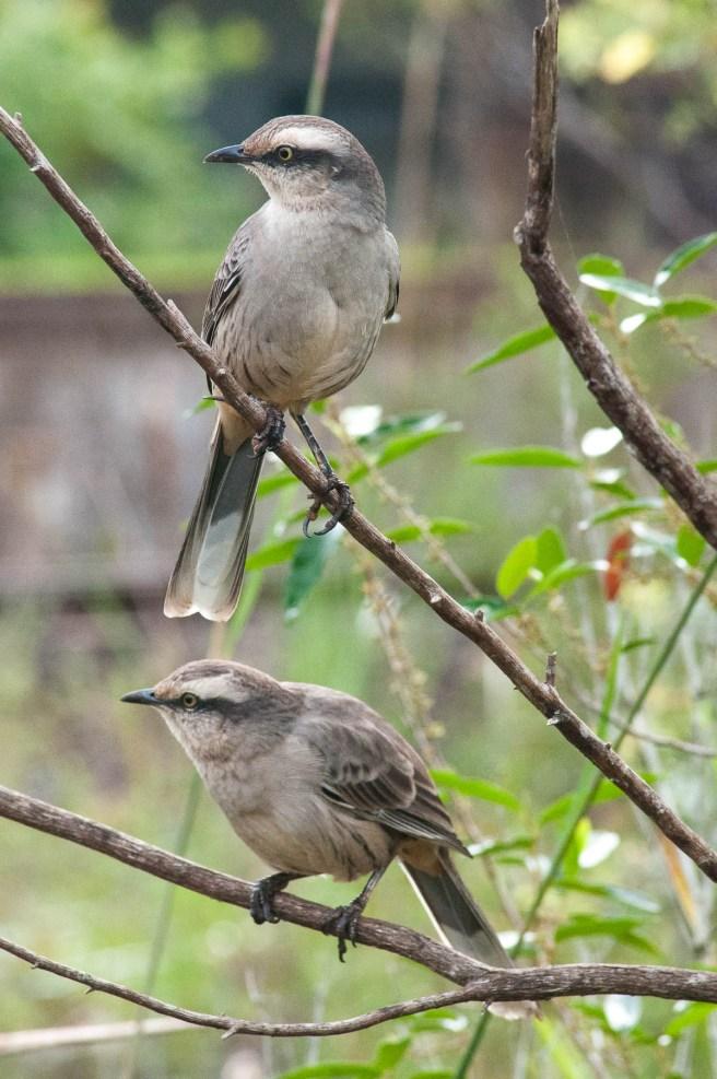 Oiseau. parc national des chutes d'Iguazu