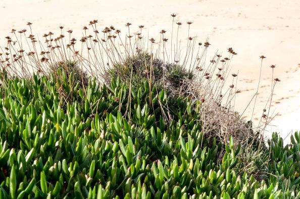 Praia passageiro végétation