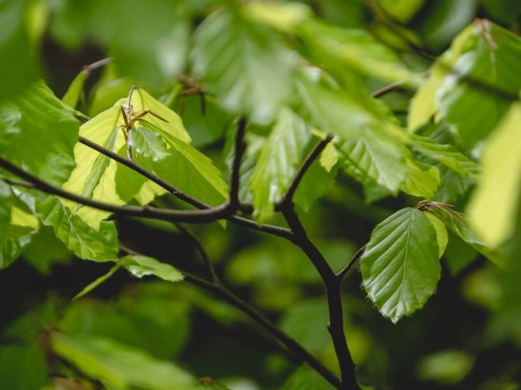 feuilles ninglinspo