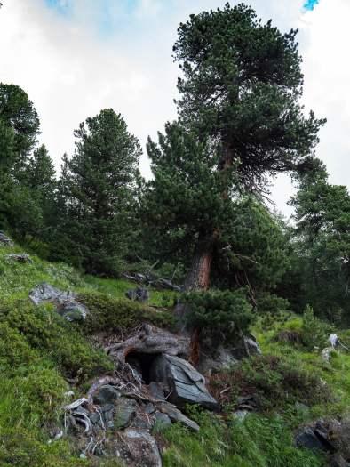 arbre vallon de réchy