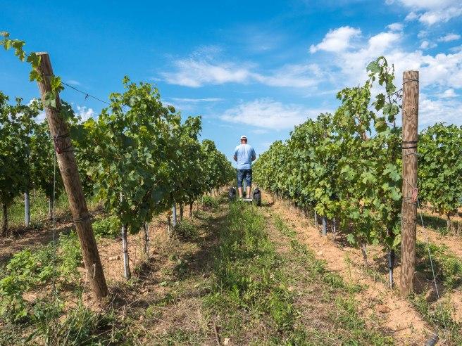Les vignobles de Brissac Aubance près d'Angers - Domaine du bois mozé