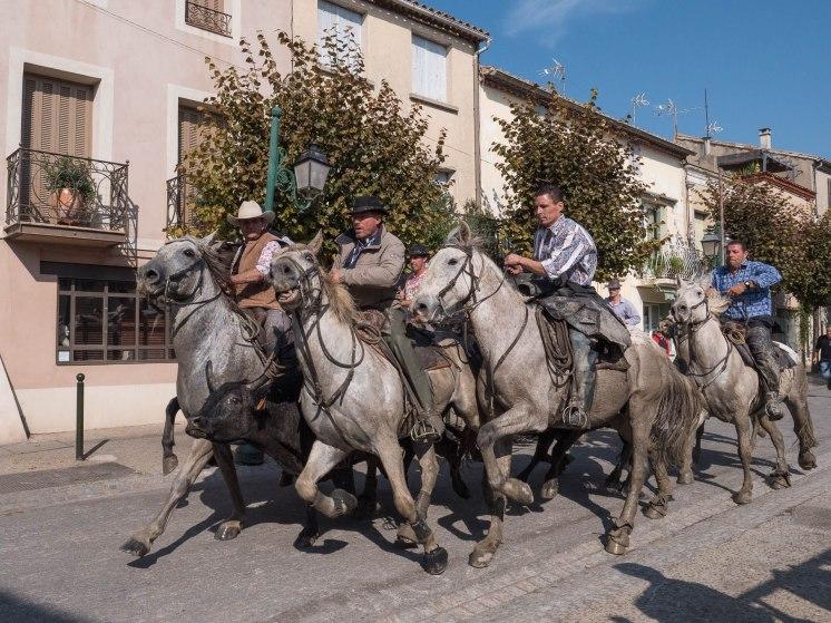 escorte du taureau par les chevaux camarguais