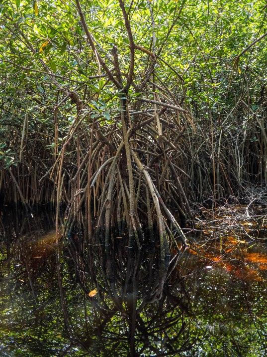 mangrove au Bénin près de bab's dock sur la route des pêches