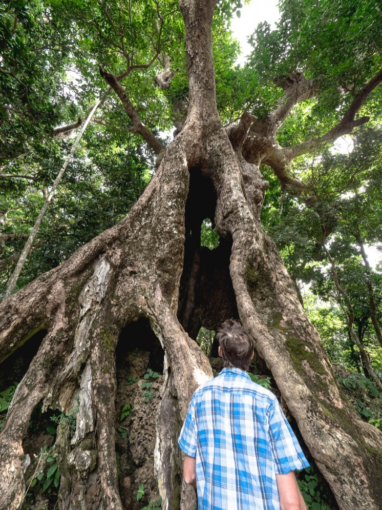 automn maple tree - kenting