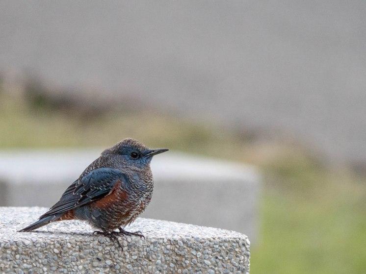 parc forestier kending oiseau