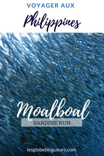 Observer Les Sardines à Moalboal Le Sardine Run Sur Lîle De Cebu