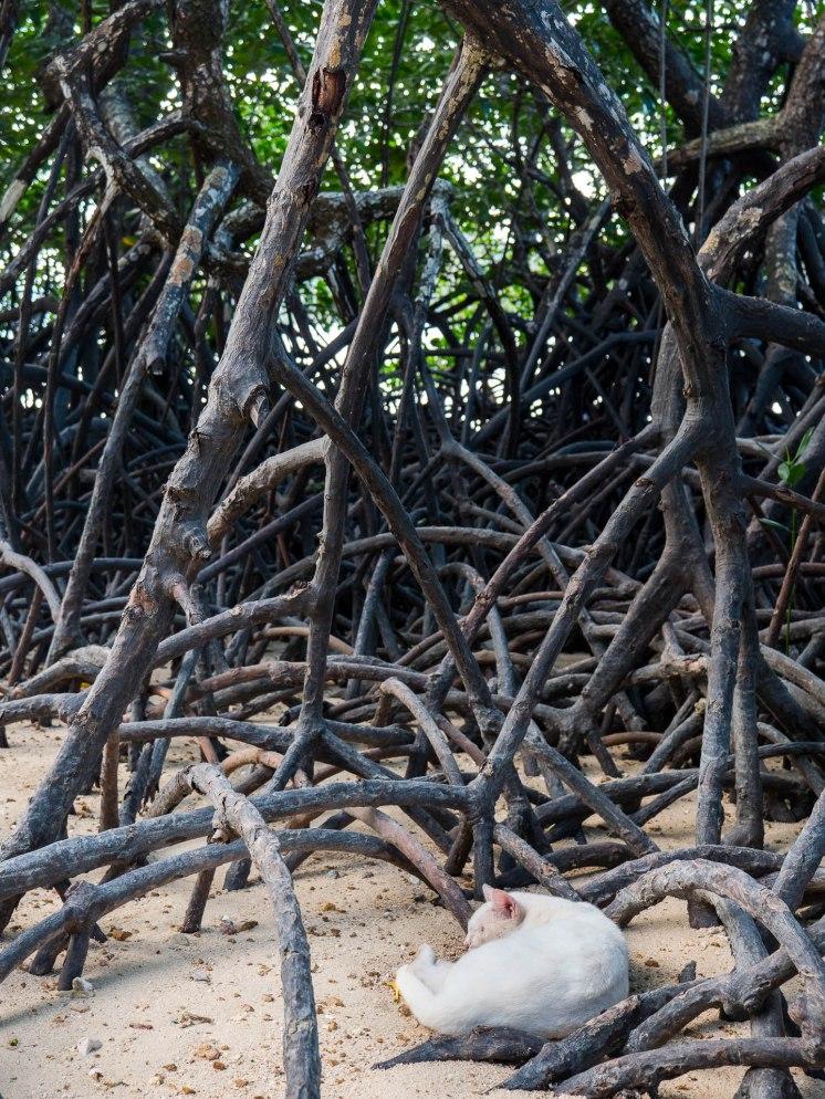 coron chat mangrove