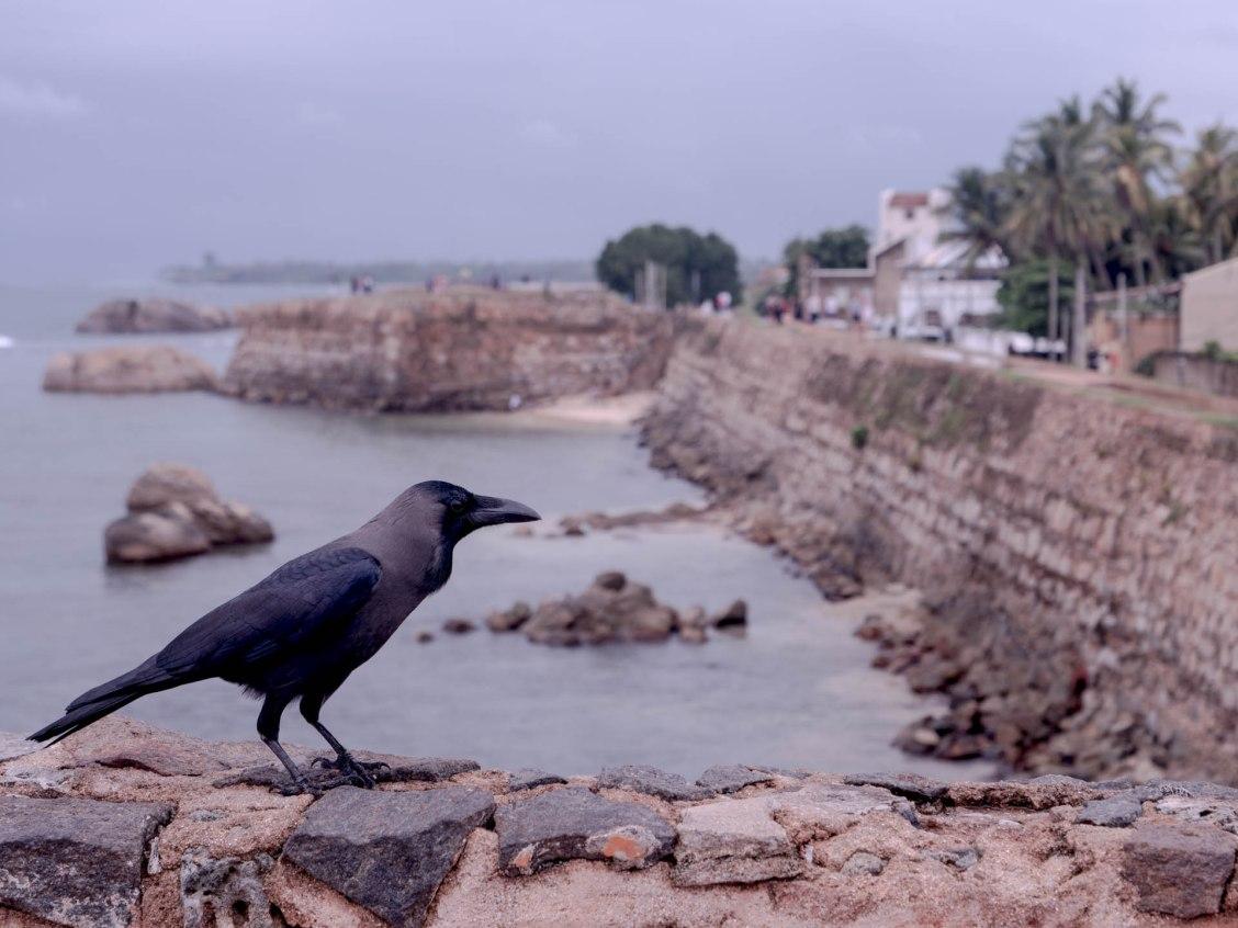 Les remparts de Galle au Sri lanka