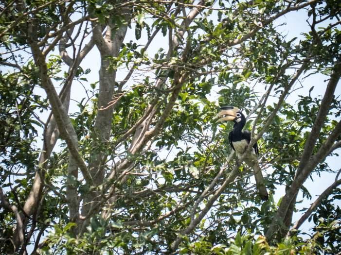 Parc national Udawalawe oiseaux