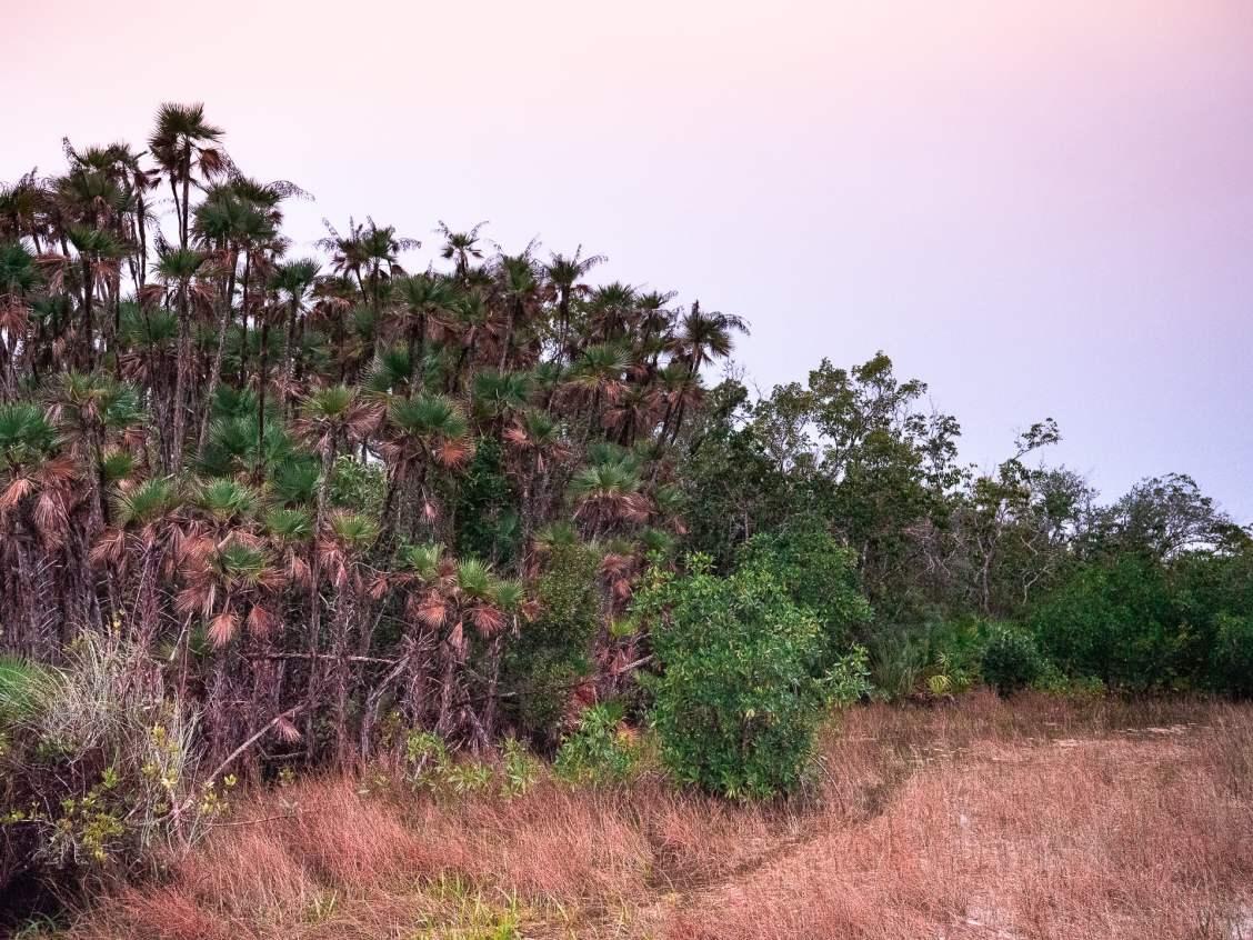 Hammock everglades floride