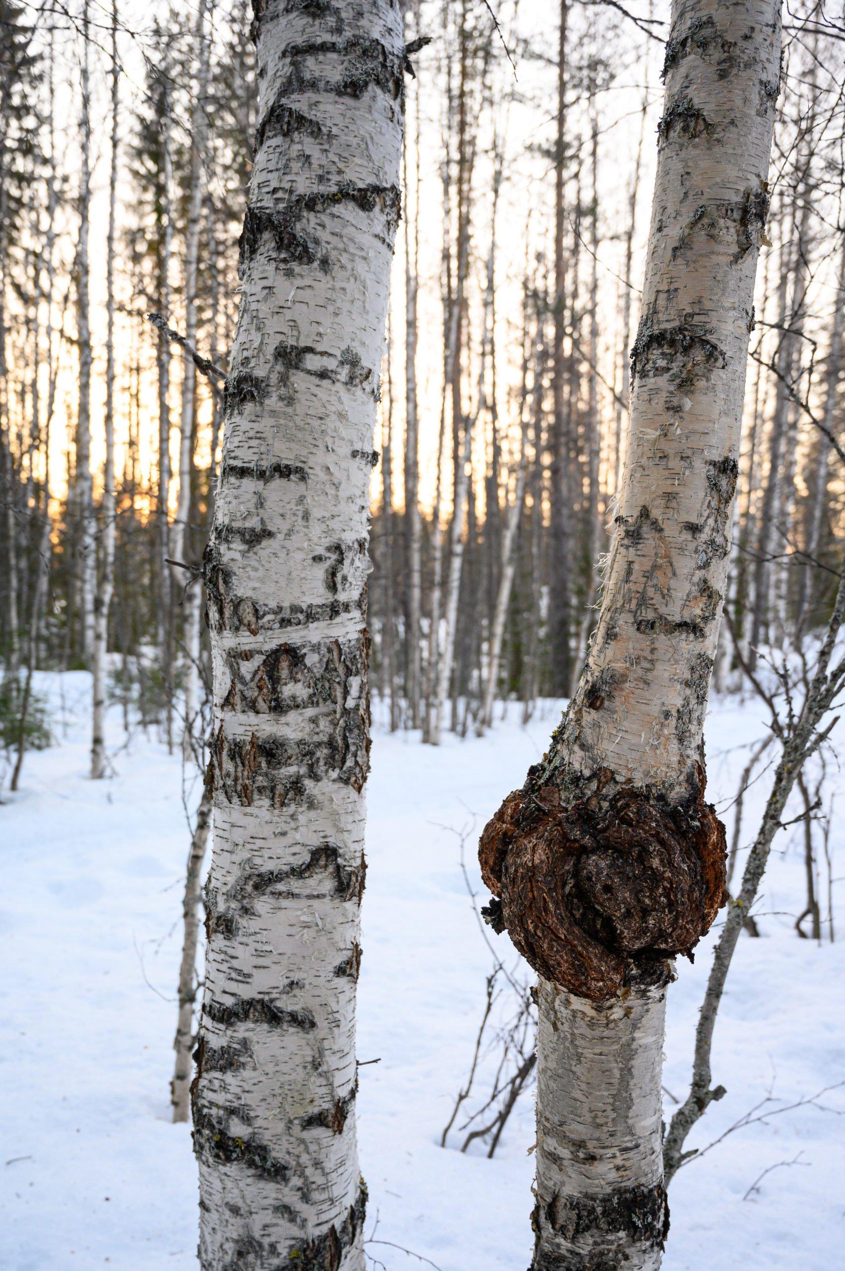 Laponie 1756 scaled