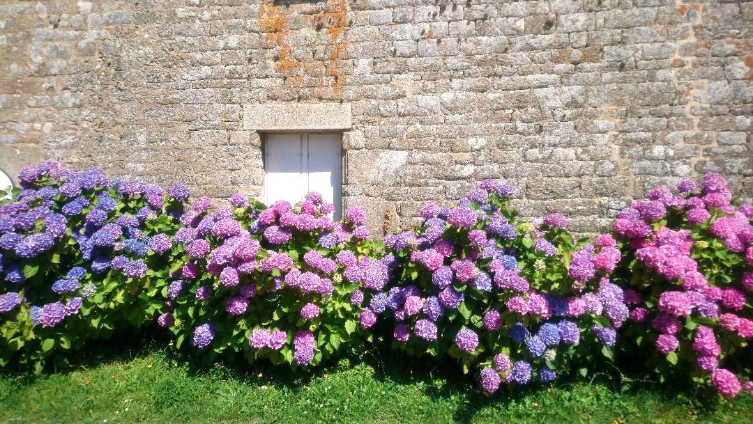 fleurs arz - Les globe blogueurs - blog voyage nature