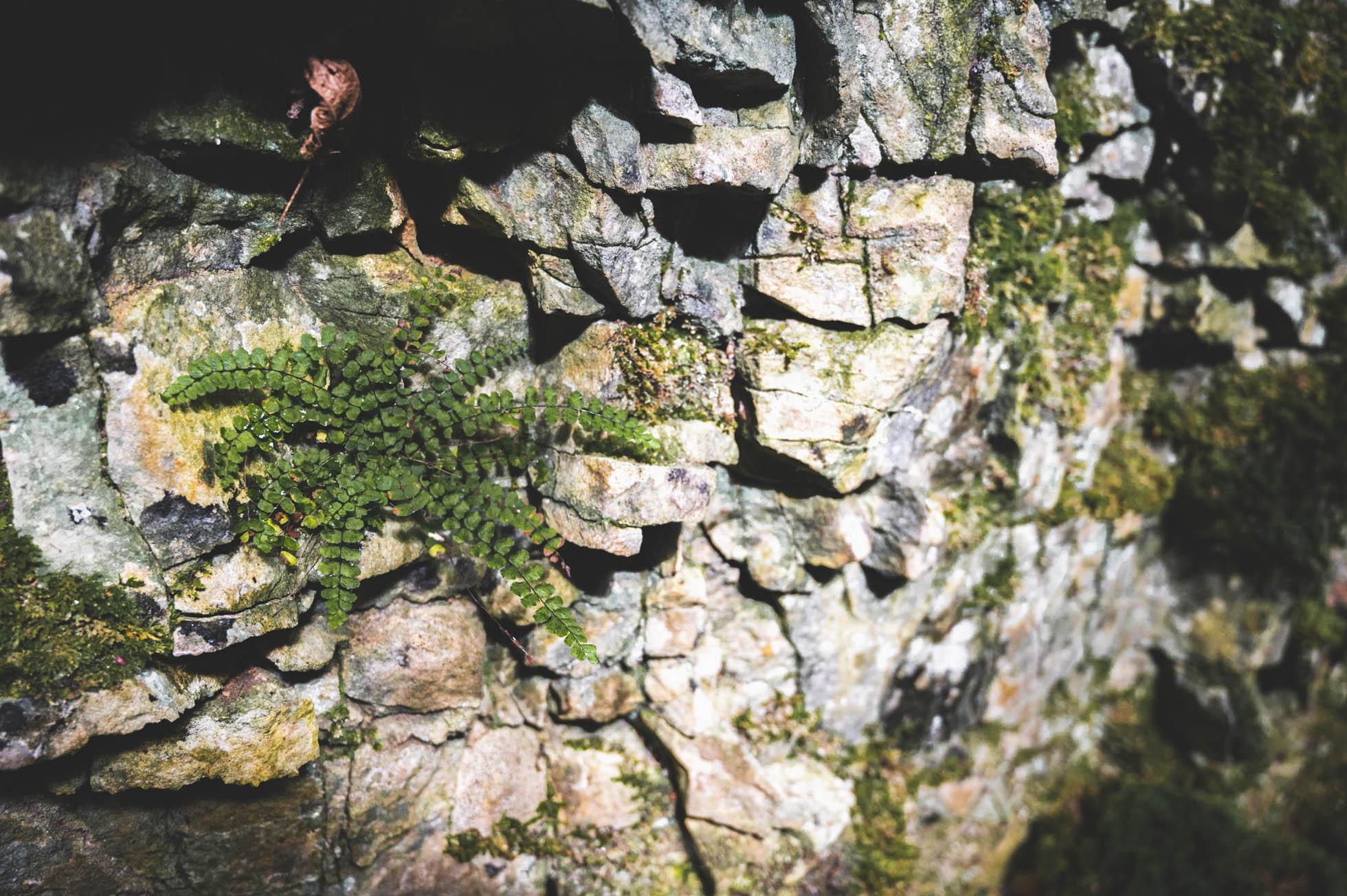 haute marne 4133 Copie - Les globe blogueurs - blog voyage nature