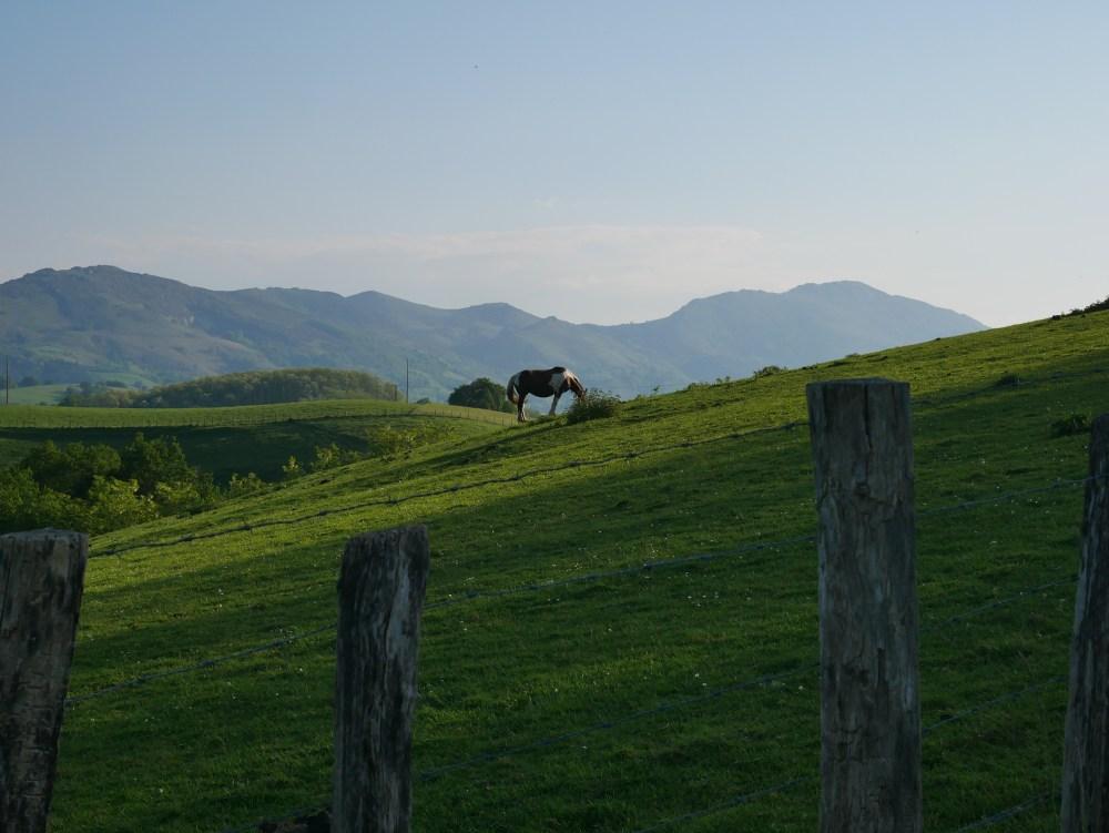 Les chevaux sont nombreux dans les pâturages...
