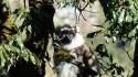 Il n'y a que deux espèces de singes au Népal: celui-ci est un Langur.