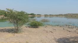 A proximité du palais, un plan d'eau accueille les oiseaux. Mais par endroit l'eau prend une couleur bleue surnaturelle, signe d'une pollution non maîtrisée...