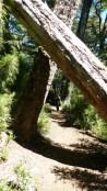 Les arbres sont de plus en plus imposants à mesure qu'on monte
