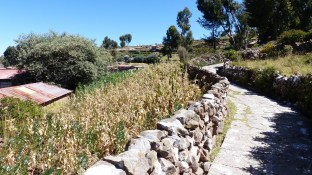 Les murets de pierre donnent un air de méditerranée à l'île