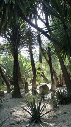 La flore typique du bassin de Mexico