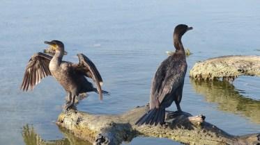 Les oiseaux ont fait leur toilette et se sèchent au soleil