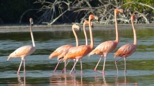 Ces oiseaux sont vraiment majestueux