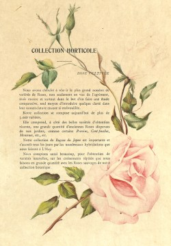 1900 Catalogue GE (47J_003_045a)_wp