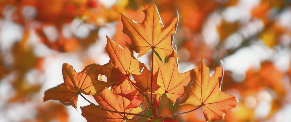 automne-peau-conseils-beaute-peau-corps