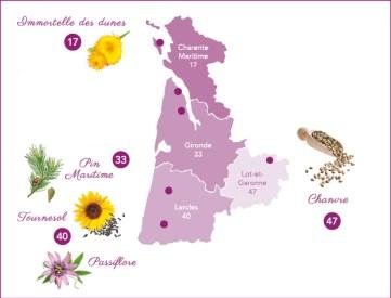L Audacieuse, crème de soin visage éclat, aux plantes locales du sud ouest, pin maritime, tournesol, passiflore, immortelle des dunes, chanvre