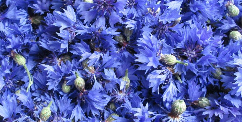 Choisir une eau florale (ou un hydrolat) selon son type de peau