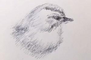 Dessiner-oiseau-10minutes