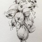 dessin-oignon-roscoff-6l