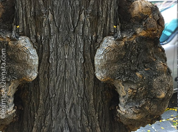 Chasse-de-Textures-bebe-arbre