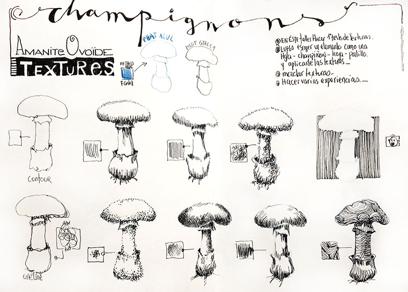 champignons-textures-dessin-renata-3