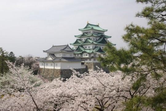 Château de Nagoya sous les fleurs
