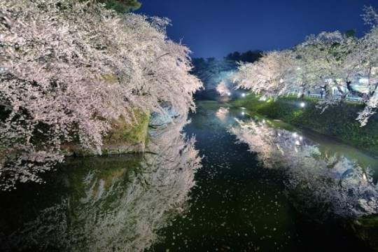 Festival de Hirosaki, par Sho Shibata.