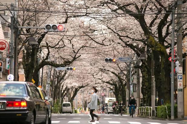 Allée de cerisier face à la station JR Itabashi par Aungvara Nomnunthasab