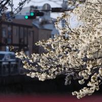 Documentaire Japon