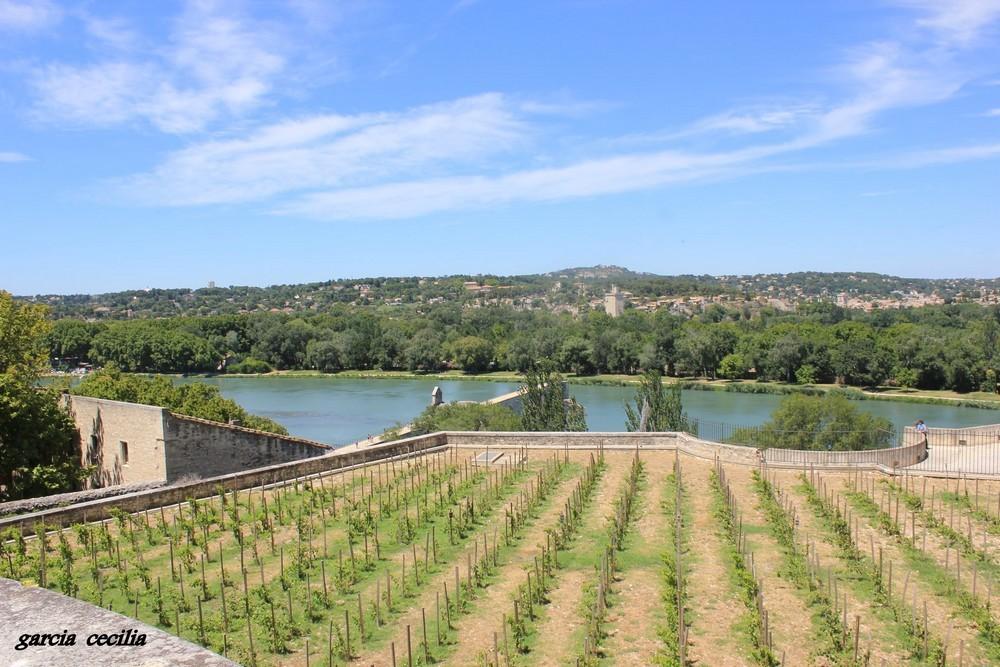 Vignobles du Palais