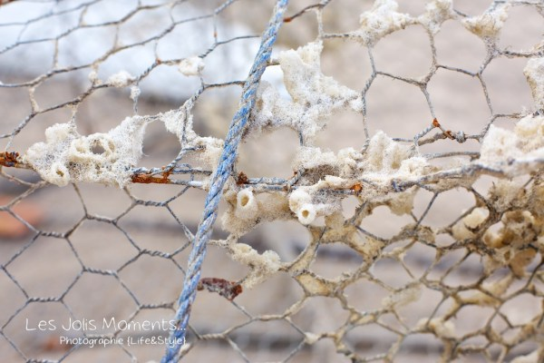 détail casier de pêche Anse Dufour Martinique